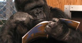 scimmia che legge